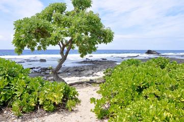 Kaloko-Honokohau national park, Big Island (Hawaii)