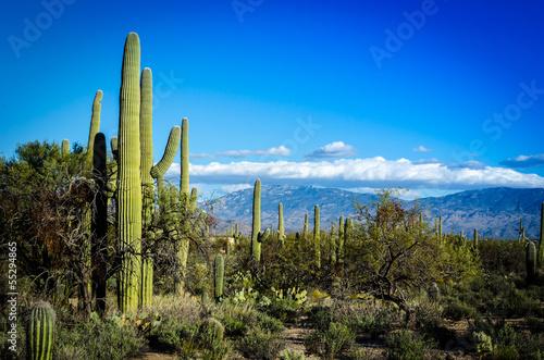 Leinwanddruck Bild Desert Scape