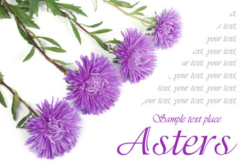 beautiful holiday card out of the blue asters with the text