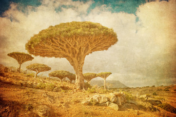 Vintage image of Dragon trees at Dixam plateau, Socotra Island,