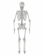 Skelett_002