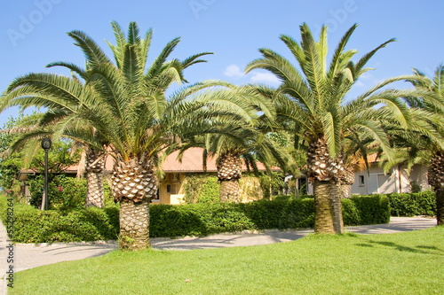 Palm trees in the countryside