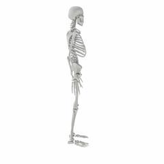 Skelett_003