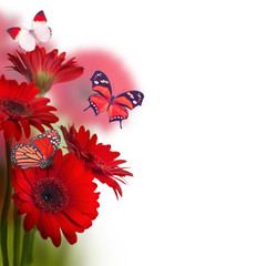 Multi-colored gerbera daisiesand butterfly