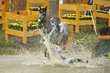 Reiter stürzt ins Wasser