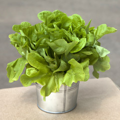 Green salad in flower silver pot on table as decoration