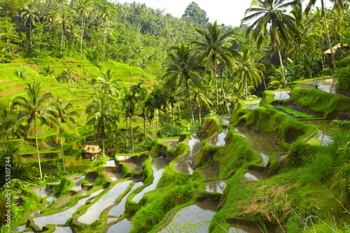 Staande foto Indonesië Rice terrace