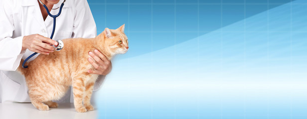 Ginger cat with veterinarian doctor.