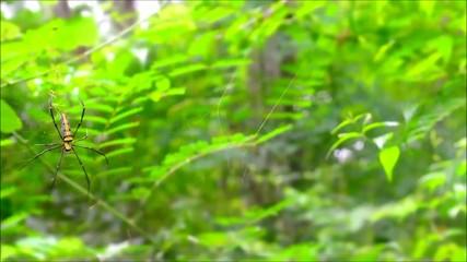 Spider in green jungle