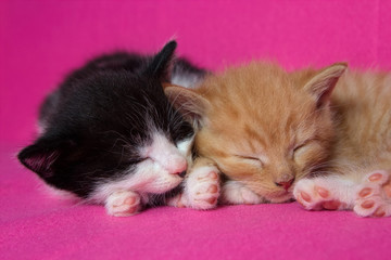 Two kittens slleping together