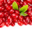 Fresh cornel berries isolated on white