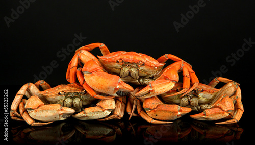 Boiled crabs isolated on black