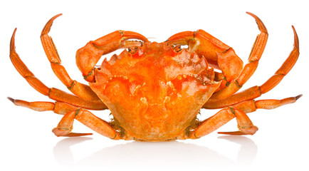 fresh red crab isolated on white background