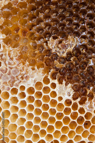 Extracting honey from the comb