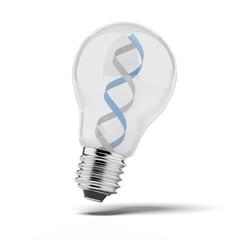 DNA strand in bulb