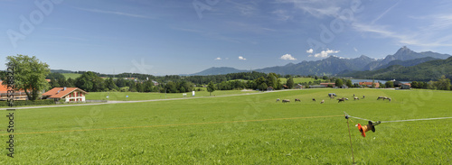 Panorama Algaeu with cows