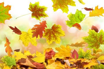 Herbst 51