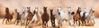 Leinwanddruck Bild - A herd of horses running on the sand storm
