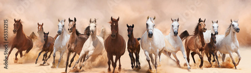 Leinwanddruck Bild A herd of horses running on the sand storm