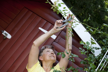 Aktive Frau beim Rosenschnitt im Garten