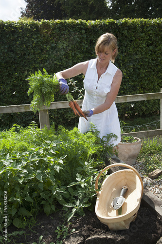 Woman pulling carrots from a raised bed