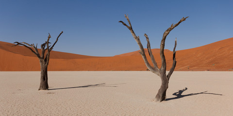 Two dead trees in Namib Deadvlei, Namibia