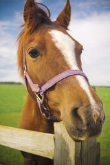 Healthy horse portrait