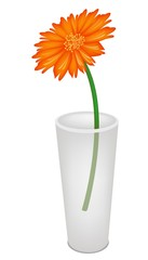A Lovely Fresh Daisy Flower in Glass Vase