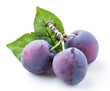 Plums with leaf isolated