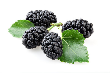 Mulberry with leaves isolated