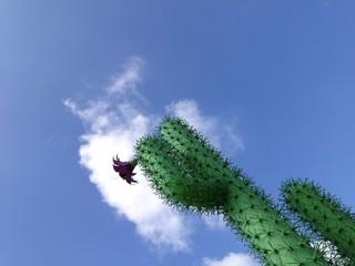 Kaktus vor Himmel
