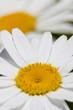 macro extreme close up of flower