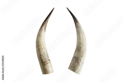 Fotobehang Olifant Big ivory tusks