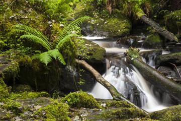 Ablauf des Torc Wasserfalls im Killarney Nationalpark