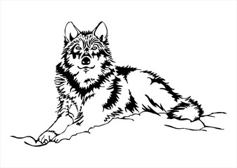 wolf sit sketch vector