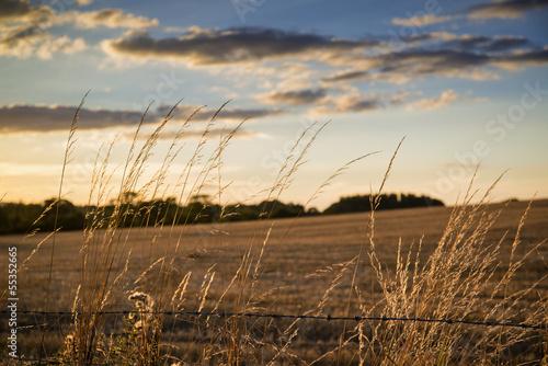 Papiers peints Beige Beautiful Summer landscape of sun backlighting field in countrys