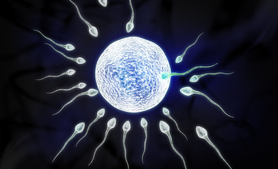 sperm and ovule