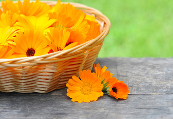 Fresh calendula flowers are in a basket on wooden table