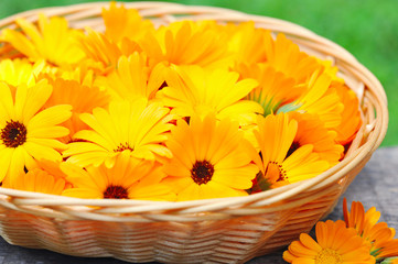Fresh calendula flowers are in a basket