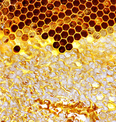 Sweet honeycomb of wild bees