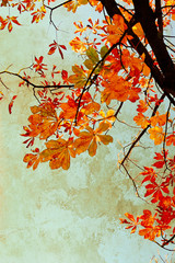 Orange chestnut leaves grungy background