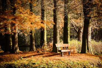 Colorful autumn landscape. Beautiful autumn forest