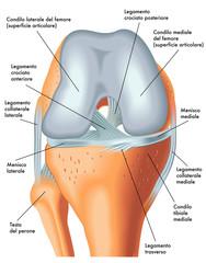 vista anteriore ginocchio destro