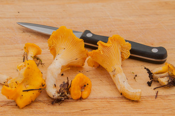 Cleaning up chanterelles