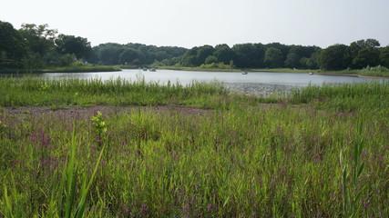 公園の池とボート  インターバル撮影