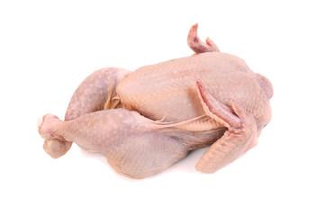 Broiler chiken