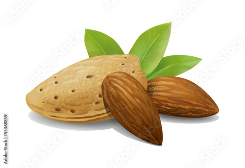 Almonds illustration