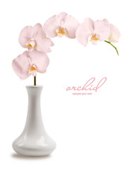 branch pink orchid in vase
