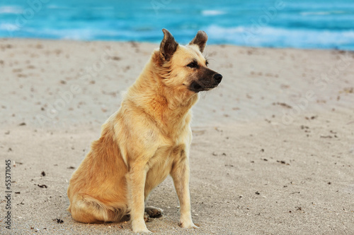 dog sitting on beach