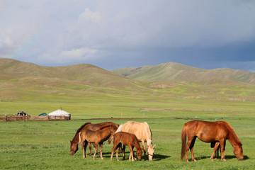Chevaux en liberté dans la steppe